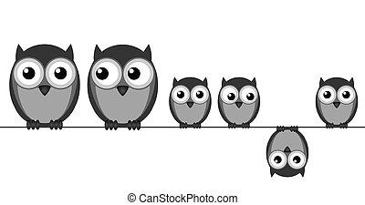 貓頭鷹, 家庭