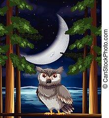 貓頭鷹, 背景, 夜晚
