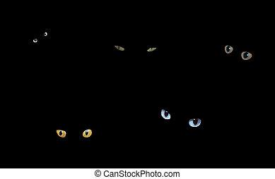 貓, 在暗處