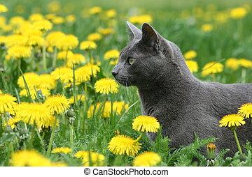 貓, 在, the, 花