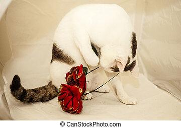 貓, 玩, 由于, 織品, roses.