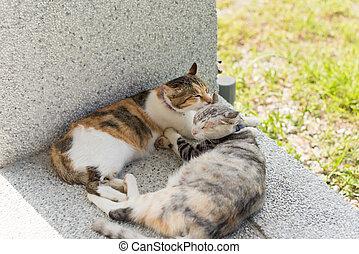 貓, 舔, 她, 母親