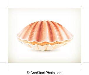 貝殻, イラスト