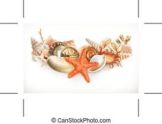 貝殻, セット, イラスト