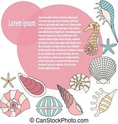 貝殻, フレーム