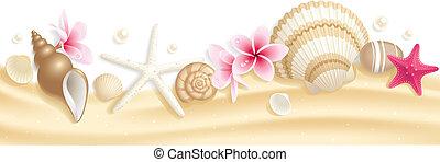 貝殻, ヘッダー