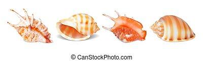 貝殻, ベクトル, セット