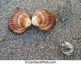 貝殻, 上に, 浜