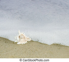 貝殻, 波