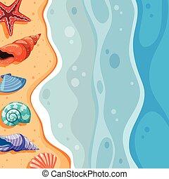 貝殻, 浜 場面, 背景