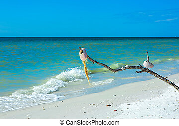 貝殻, 浜, tigertail, 木