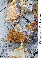 貝殻, 海岸, 海