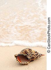 貝殻, 海洋 波