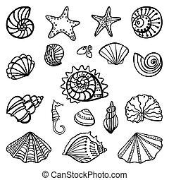 貝殻, 白, セット, 背景