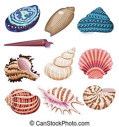 貝殻, set., ベクトル