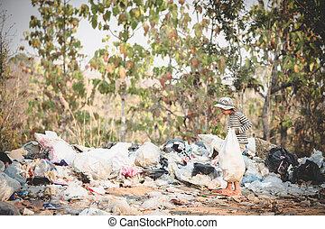 貧しい, 窮乏, 収集, 彼の, 男の子, ごみ, 概念, 子供, 得なさい, 暮らし, 袋