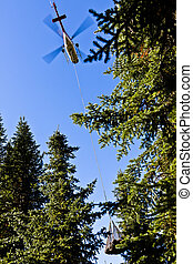 貨物, 届く, リモート, 森林地帯, ヘリコプター