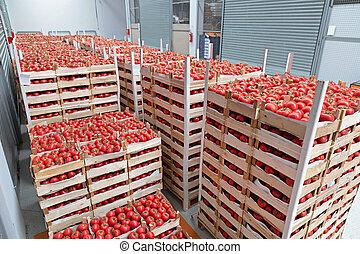 貯蔵, トマト