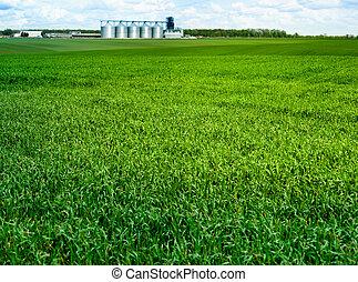 貯蔵, 丘, 穀粒, 農業, 草, 終わり, 小麦, 緑, フォーカス, ファシリティ, horizon., 穀物, 風景, フィールド