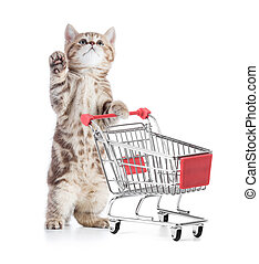 買い物, の上, 隔離された, カート, ねこ, 見る