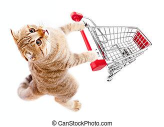 買い物, 上, 隔離された, カート, ねこ, 白, 光景