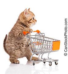 買い物, 隔離された, イギリス, ねこ, カート, white., 子ネコ, osolated