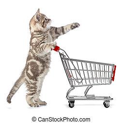 買い物, 隔離された, カート, ねこ