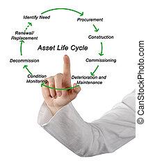 資產, 生命周期