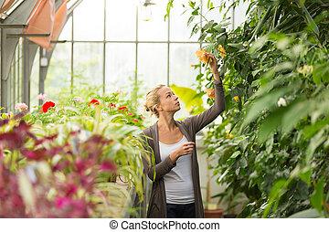 賣花人, 婦女, greenhouse., 工作