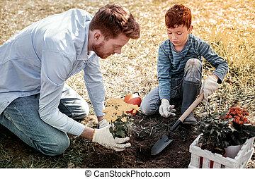 購入, 庭, 実生植物, 父, 息子, 店, 小さい, 特別