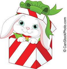 贈り物, うさぎ, 箱, クリスマス