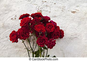 赤いバラ, 庭