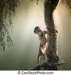 赤ん坊のヒヒ, 木