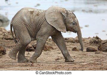 赤ん坊, アフリカの象