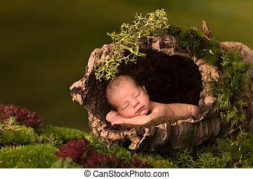赤ん坊, トランク, 木, 睡眠, くぼみ