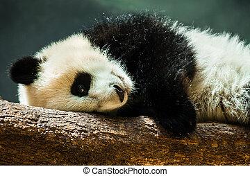 赤ん坊, 休む, 丸太, パンダ, 幼獣