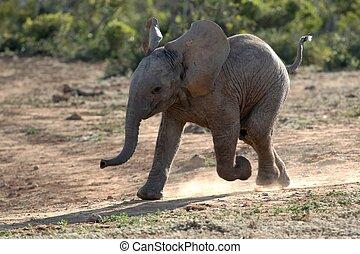 赤ん坊, 動くこと, 象
