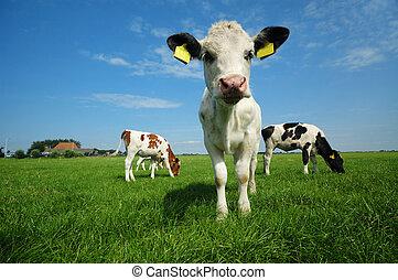 赤ん坊, 夏, 牛, かわいい