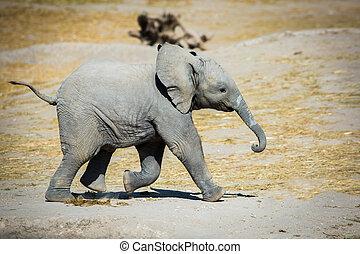赤ん坊, 横に, 動くこと, 象