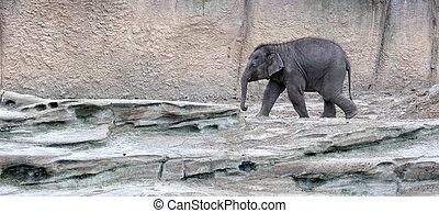 赤ん坊, 歩くこと, 象