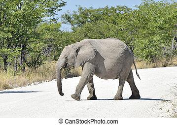 赤ん坊, -, etosha, ナミビア, 象