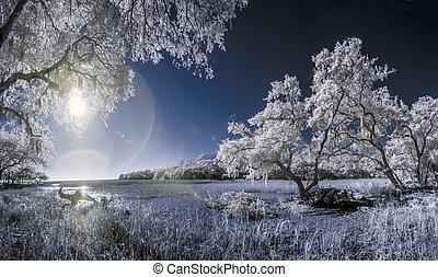 赤外線, 写真, の, 木, そして, 沼地