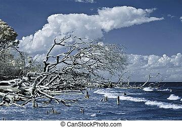 赤外線, 打撃, の, 流木, そして, 海洋