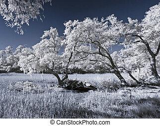 赤外線, 風景, の, 沼地, そして, 木
