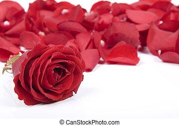赤, 花弁, バラ
