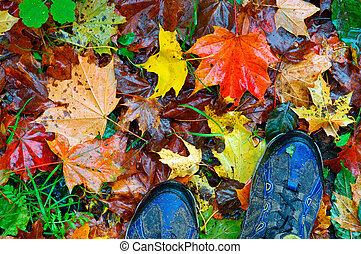 走, 通过, 秋季, 公园