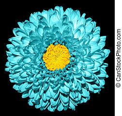 超現実的, 暗い, シアン, 菊, (golden-daisy), 花, ∥で∥, 黄色, 心, マクロ, 隔離された, 上に, 黒