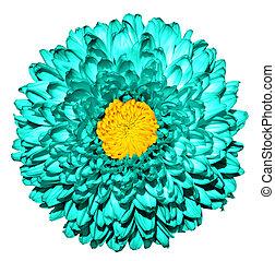 超現実的, 暗い, トルコ石, 菊, (golden-daisy), 花, ∥で∥, 黄色, 心, マクロ, 隔離された, 白