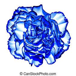 超現実的, 暗い 青, クロム, ?love, 花, マクロ, 隔離された, 白