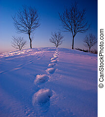 足跡, 中に, 雪
